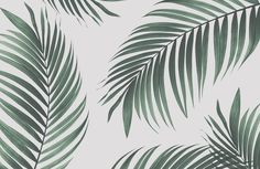 Feel the breeze of the tropics in your own home with our Tropical Palm Wall Mural. Transform any room into a tropical paradise with this organic wallpaper. This product is a close-up, highly filtered Minimalist Home Interior, Minimalist Bedroom, Minimalist Decor, Minimalist Style, Minimalist Kitchen, Minimalist Living, Palm Leaf Wallpaper, Home Wallpaper, Tropical Bathroom