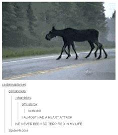 Its lokis horse/moose child Funny Animal Memes, Stupid Funny Memes, Cute Funny Animals, Haha Funny, Funny Posts, Hilarious, Mythological Creatures, Mythical Creatures, Emo