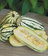 Heirloom Seeds - Vegetable Seeds and Plants, Squash, Delicata at Burpee.com