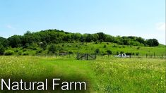 Natural Farm Tour 2020 Permaculture, Sustainability, Vineyard, Tours, Natural, Outdoor, Instagram, Outdoors, Outdoor Games