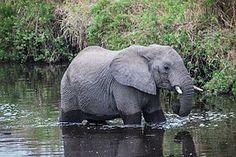 Safari, Tanzanie, Serengeti, Afrique