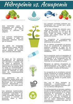 Hidroponia vs. Acuaponía www.acuaponiaandina.co