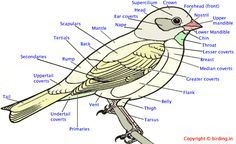 What's what on the bird.