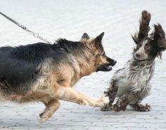 動物写真.bot@animalpic_bot びっくりする犬