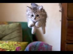 Funny Cats - Funny Kitty Cat Videos Compilation - Cute Kittens Fail Video №20 - Приколы с котами №20 - http://positivelifemagazine.com/funny-cats-funny-kitty-cat-videos-compilation-cute-kittens-fail-video-%e2%84%9620-%d0%bf%d1%80%d0%b8%d0%ba%d0%be%d0%bb%d1%8b-%d1%81-%d0%ba%d0%be%d1%82%d0%b0%d0%bc%d0%b8-%e2%84%9620/ http://img.youtube.com/vi/lrLyeRM34l0/0.jpg  Do you search a cats and cucumbers video, cat fails, catfish, cats meowing, cat in the hat, cat vi