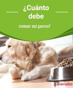¿Cuánto debe comer mi perro?  Te has preguntado alguna vez ¿cúanto debe comer mi perro? Vamos a darte respuesta a todas ellas en este artículo. ¿Te lo vas a perder? #recomendaciones #alimentación #miperro