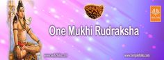 One Mukhi Rudraksha can bring you immense power, wealth, massive confidence boost and spiritual enrichment. The Vaastu of this bead often carries an auspicious sign of signifying a connection with Lord Shiva. This is the best among all other Rudraksha seeds. This is the mother of all other forms of Rudraksha.  #OneMukhiRudraksha #Rudraksha #SinglePhasedRudraksha #Vedicfolks