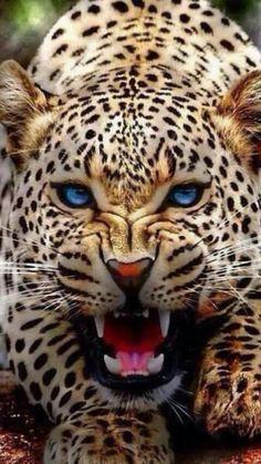 Snow Leopard Nature, Animals, Wildlife: The Beauty at one place Nature Animals, Animals And Pets, Cute Animals, Baby Animals, Animals Planet, Pretty Animals, Beautiful Cats, Animals Beautiful, Animals Amazing