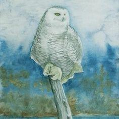 森の賢者シロフクロウの子供を透明水彩で描いています。・サイズは23,0x32,0・画像と原画では多少色合いの違いがあります。・画像のサインは原画には付いていません。・送料は無料です。 ☆お買い上げ特典として「鳥シリーズ」のポストカード4枚プレゼントします。