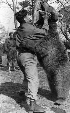 'Wojtek was a Syrian brown bear cub found in Iran and adopted by soldiers of the Artillery Supply Company of the Polish II Corps. He enjoyed wrestling and was taught to salute when greeted. He was officially drafted into the Polish Army as a private. Wojtek Bear, Battle Of Monte Cassino, Hand To Hand Combat, Bear Cubs, Four Legged, World War Two, Wwii, Grenada, The Incredibles