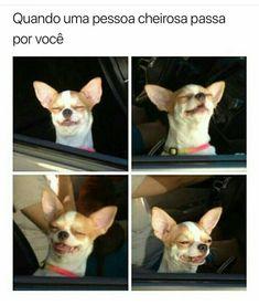 100 Chihuahua Memes That'll Make You Laugh Harder Than You Should Funny Animal Jokes, Funny Dog Memes, Funny Animal Pictures, Animal Memes, Funny Dogs, Cute Dogs, Funny Animals, Cute Animals, Funny Captions