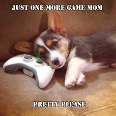 Pleeeeeeeeeeeease cute corgi puppy