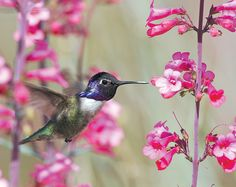 Secrets for taking glorious photographs of birds in the garden.