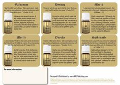 Young Living Essential Oils: 12 Essential Oils of Ancient Scripture Bible Essential Oils Guide, Essential Oil Uses, Young Living Oils, Young Living Essential Oils, Healing Oils, Aromatherapy Oils, Yl Oils, Carrier Oils, Pure Products