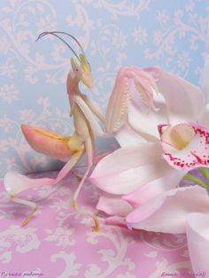 http://biba7.livejournal.com/     моден клей,   тонировка белым цинком т.к. он прозрачнее чем титан и розовой и травяной,сверху  лак