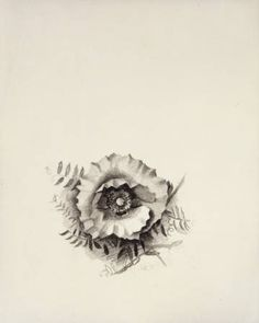 Georgia O'Keefe, Small Poppy with Vine II, c 1927, charcoal on paper
