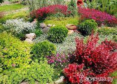 Как использовать барбарис в дизайне сада: Группа Ландшафтный дизайн