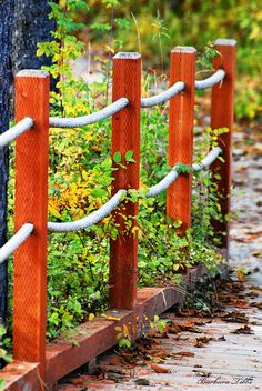 Autumn Rope Fence (Explored) | Flickr - Photo Sharing!