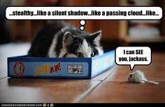 Evil mouse.