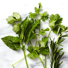 Summer Produce Guide: Herbs