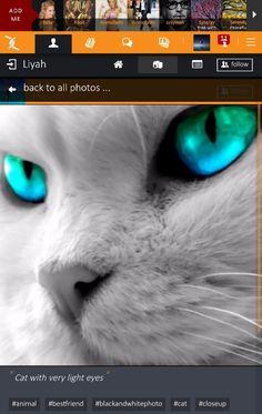 Cat with very light eyes :: #whitecat #cat #pet #bestfriend #animal #closeup #blackandwhitephoto #colorfuleyes #lighteyes  https://x-uniting.com/profile/84/galleries/details/9984
