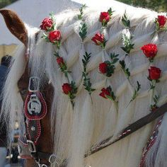 Roses braided into this Gypsy Vanner's mane
