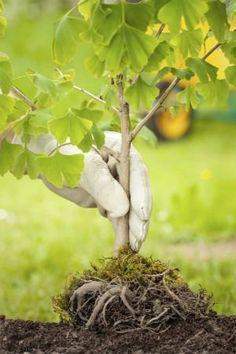Best Time to Plant a Tree (Spring vs. Fall), Solved The Best Time to Plant a Tree Herb Garden, Lawn And Garden, Garden Plants, Trees And Shrubs, Trees To Plant, Bob Vila, Fall Plants, Autumn Trees, Houseplants