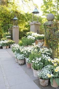 You do not necessarily need to have a cottage just to have a cottage-inspired garden decor. With a help of a few cottage garden decor ideas, you can style Amazing Gardens, Beautiful Gardens, Garden Wallpaper, Jardin Decor, Pot Jardin, Beautiful Flowers Garden, White Garden Flowers, Potted Flowers, Home Flowers