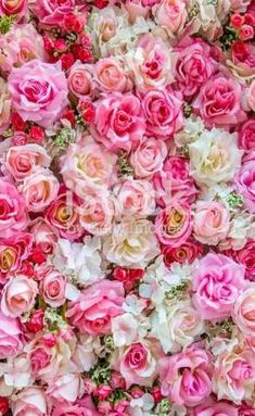Pink and red roses romantic floral print design. Rose Flower Pictures, Beautiful Flowers Pictures, Beautiful Roses, Flower Prints, Flower Art, Cactus Flower, Pink Roses, Pink Flowers, Exotic Flowers