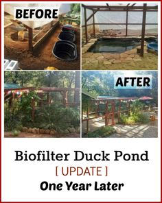 Check out the photos from the Permaculture Biofilter Duck Pond a Whole Year Later after being built!  (The Urban Ecolife)