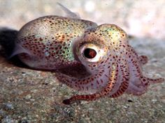Baby squid  :  )  How awesome is that, huh? @Faye Barber Broderick