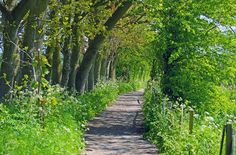 Pathway to Healthy Living