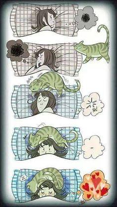 O my gatos I Love Cats, Cute Cats, Funny Cats, Funny Animals, Cute Animals, Cats Humor, Crazy Cat Lady, Crazy Cats, Cat Comics