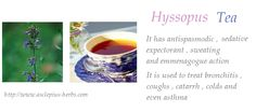 #Hyssopus Tea – #antispasmodic , #expectorant , #sweating , sedative , emmenagogue action