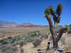Red Rock Canyon National Conservation Area, Nevada.  This area is managed by the Bureau of Land Management's National Landscape Conservation System (NLCS).