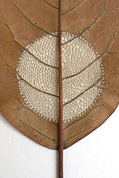 "Susanna Bauer, ""Moon ll"", Crocheted dry leaf. Fucking brilliant and gorgeous!"