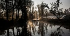 Xochimilco Journal: An Aquatic Paradise in Mexico, Pushed to the Edge of Extinction