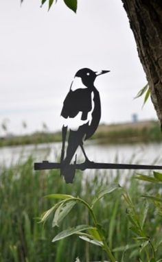 Australian Magpie | http://www.yookoo.nl/collections/tuindecoratie/products/magpie