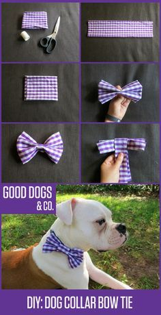 ♥ DIY Dog Stuff ♥ How to make your dog a bow tie for their collar. So dapper!