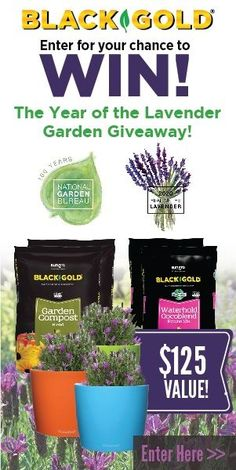 Celebrate the #YearoftheLavender by entering for a chance to win a lavender garden giveaway! Sponsored by our NGB members Black Gold and Darwin Perennials! Win 9 everblooming Primavera Spanish Lavenders (Lavandula stoechas 'Primavera') Brand New to the gardening community, two bags of Black Gold® Garden Compost Blend, two bags of Black Gold® Waterhold Cocoblend Potting Mix, and three self-watering planting containers. It's everything you will need to grow fragrant lavender. Ends June 26…