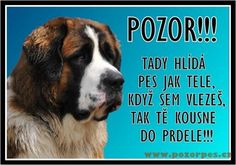 Psy, Motto, Animals And Pets, Boxer, Funny Memes, Dogs, Quotes, Pets, Quotations