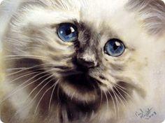 Кошки Paul Knight