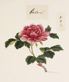ぼたん 川原 慶賀(けいが、天明6年(1786年) - 万延元年(1860年)以降)は江戸時代後期の長崎の画家である。