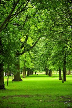 REGENTS PARK in London, England. Nice place for some exercise.