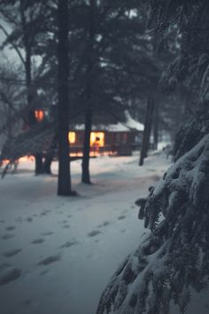 cozy cabin in the snowy woods