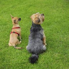 Dog Behaviourist and Dog Training Manchester - http://www.dog-ramblers.co.uk/dog-behaviourist-consultant/  #DogBehaviour
