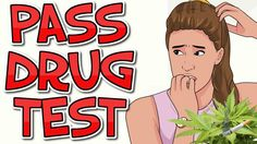 Learn how to pass a drug test. Perhaps you work for a company that requires routine standard drug tests or perhaps a drug test is a condition of a legal settlement. A drug test might use a sample of your urine hair blood or saliva. It is to your personal and professional benefit to test negative for drugs in your system. The best way to pass a drug test by far is to understand how long drugs remain in your system and discontinue drug use for the proper amount of time…