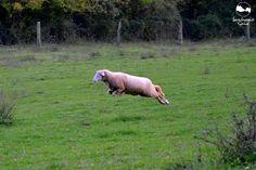 Jordi, el cordero volador