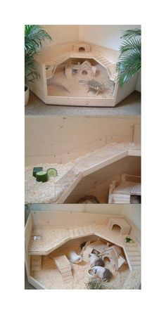 Corner guinea pig house. I would probably use grids instead of the glass front though,I don't know how much ventilation the cage is getting with the glass.adorable though!