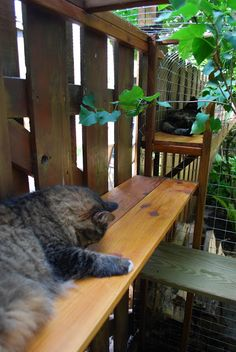 DIY outdoor cat enclosures. Goes from a cat door in the window to a ledge along the fence to a large enclosure. Brilliant design!